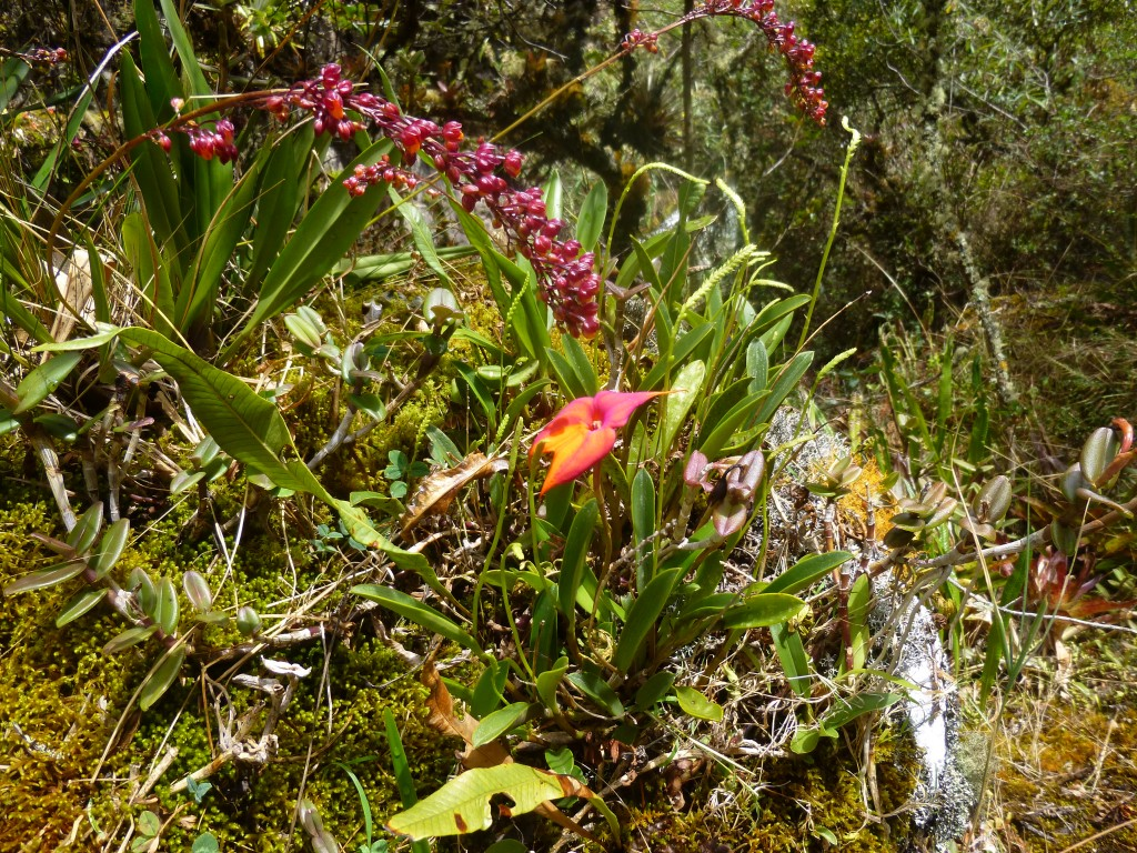 Orchids and lush vegetation in the valley on the hike to Machu Picchu