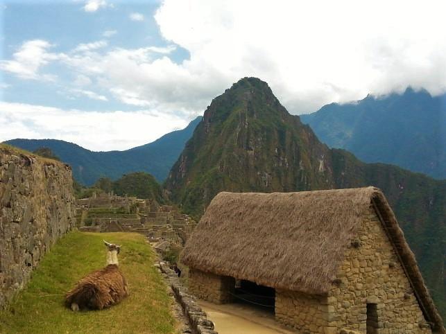 A resting Llama at Machu Picchu