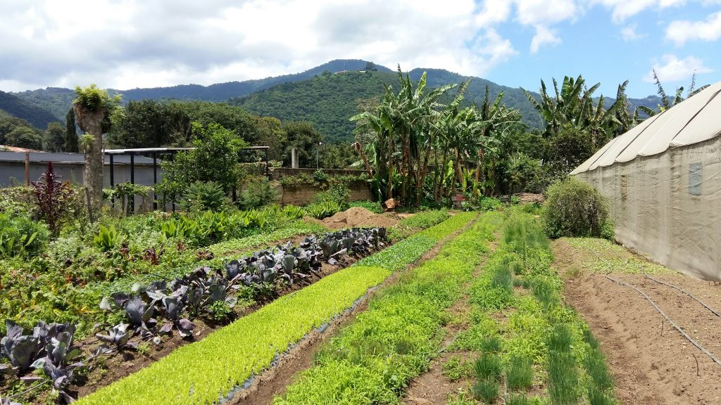 What to do in Antigua Guatemala - Coaba Organic Farm
