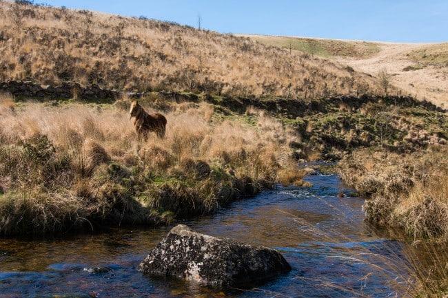 Dartmoor - Hiking in the UK