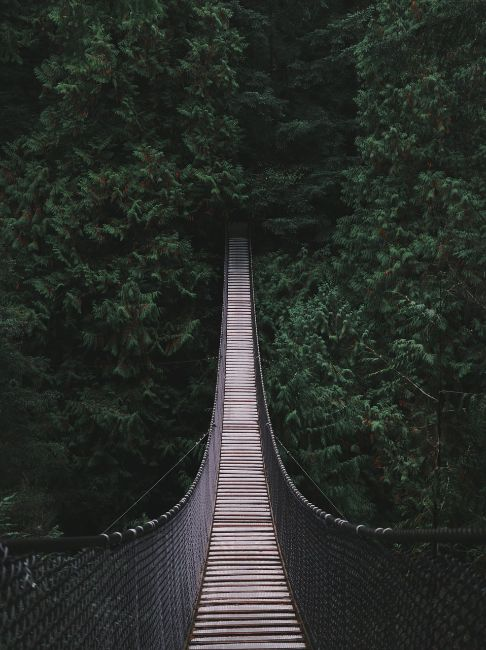 Lynn Canyon Suspension Bridge - Free Things to do in Vancouver