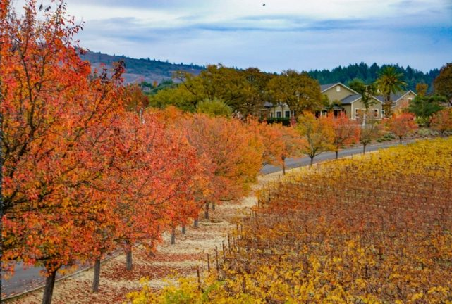 Fall in the Napa Valley - The Best Places for Fall Foliage in the USA