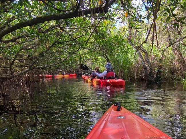 Everglades National Park Florida - National Parks in Spring Credit Travlinmad